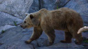 bear-179639_960_720