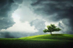 tree-832079__340